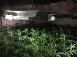 Met Police Seize £1m Worth Of Cannabis Growth In Goodmayes Clinic